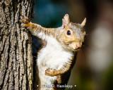 Squirrel up close