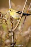 Finch on branch