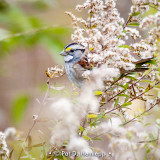 Hiding sparrow