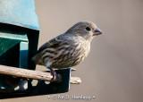 On a feeder