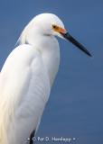 Egret at rest