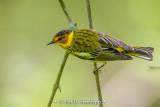 Thin perch