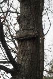Au risque de se perdre .... en forêt de Fontainebleau