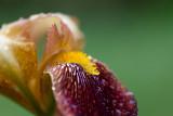 Fleurs du jardin - Garden flowers