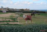 Fort-Rinella-Malta_42.JPG