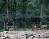zoo-timisoara_05.JPG