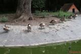 zoo-timisoara_10.JPG