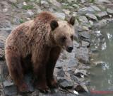 zoo-urs-timisoara.JPG