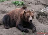 zoo-urs-timisoara_02.JPG