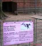 zoo-cangur-bennet-timisoara_02.JPG