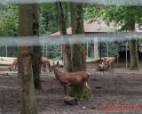 zoo-cerb-timisoara_02.JPG