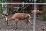 zoo-cerb-timisoara_03.JPG