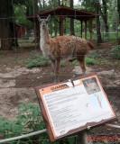 Zoo Timisoara 2018