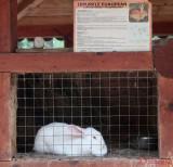 zoo-iepure-european-timisoara.JPG