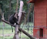 zoo-macac-coada-leu-timisoara.JPG