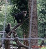 zoo-macac-coada-leu-timisoara_02.JPG