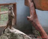 zoo-suricata-timisoara.JPG