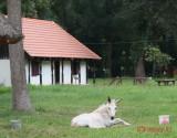 muzeul-satului-timisoara_40.JPG
