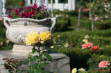 parcul-rozelor-trandafiri-timisoara_29.JPG