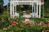 parcul-rozelor-trandafiri-timisoara_30.JPG
