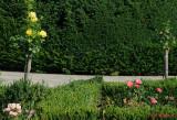parcul-rozelor-trandafiri-timisoara_32.JPG