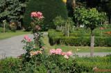 parcul-rozelor-trandafiri-timisoara_41.JPG
