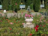 parcul-rozelor-trandafiri-timisoara_48.JPG