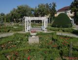 parcul-rozelor-trandafiri-timisoara_50.JPG