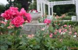 parcul-rozelor-trandafiri-timisoara_57.JPG