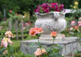 parcul-rozelor-trandafiri-timisoara_60.JPG