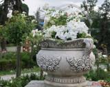 parcul-rozelor-trandafiri-timisoara_61.JPG