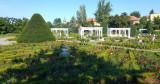parcul-rozelor-trandafiri-timisoara.jpg