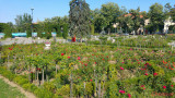 parcul-rozelor-trandafiri-timisoara_06.jpg