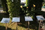 parcul-rozelor-trandafiri-timisoara_18.JPG