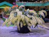 Beautiful Unusual Plant