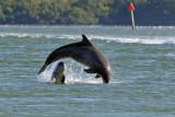 3F8A5441 Dolphins.jpg
