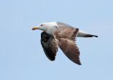 Canary Island Birds