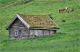 Traditional hut. Olden, Norway.