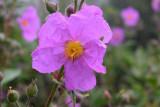 Flowers of La Palma
