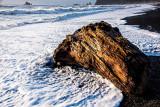 Washed-up Tree Stump