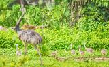 Rhea + Chicks