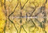 Springtime in the Danube Delta