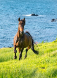 Seaside Gallop
