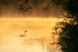 Midsummer Dawn - River Shannon