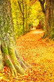 Autumn River Walk