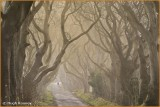 Ireland - Co.Antrim -  The Dark Hedges.