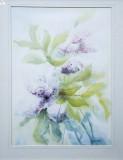 SONJA Hortensia - aquarel PSLR-7503.jpg