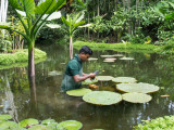 Gardener is taking care of the water plants