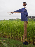 Elegance in Scarecrows