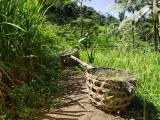 Rice basket